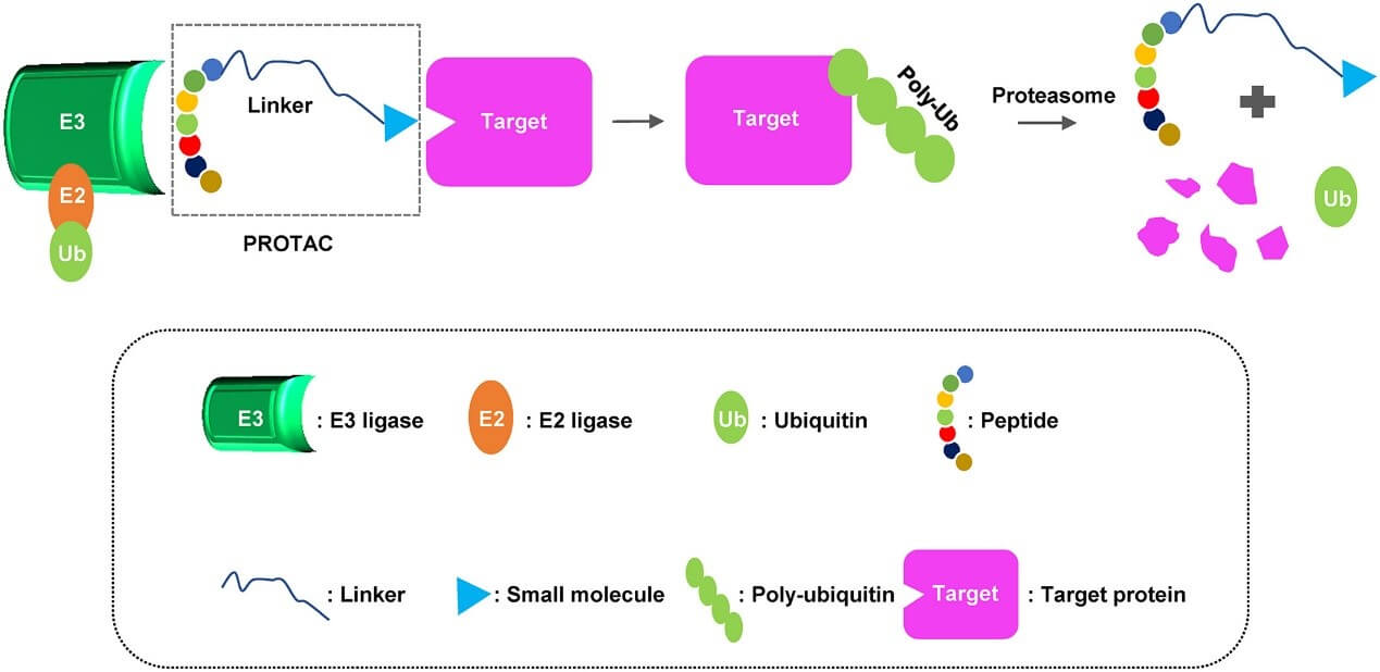 Ligand for Target Protein